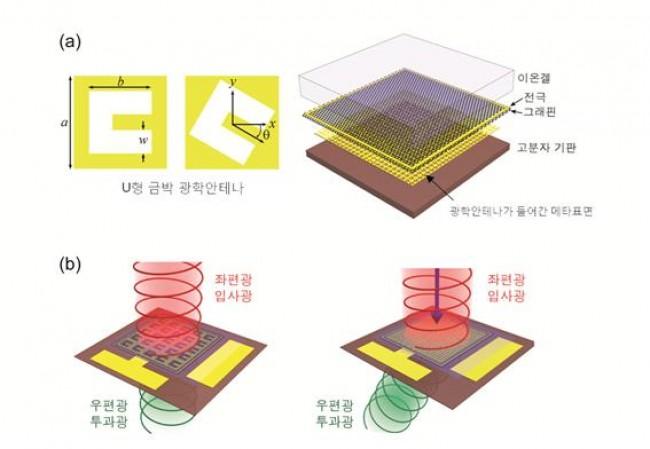 (a) 왼쪽은 U형 금박 광학안테나(a=76㎛, b=51㎛, w=19㎛), 오른쪽은 연구팀이 개발한 그래핀 메타표면의 구조도. 이온겔, 그래핀, 광학안테나가 들어간 메타표면, 고분자 폴리이미드 기판으로 구성돼 있다. (b) 입사 된 원형편광 입사광이 서로 다른 기하학적 위상 차이에 의해 좌편광 입사광이 우편광 투과광으로 바뀌었다. 광학안테나 방향을 바꿔 선형의 위상 차이를 갖는 메타표면을 설계하면 빛의 굴절 방향을 조절할 수 있다. - 기초과학연구원(IBS) 제공